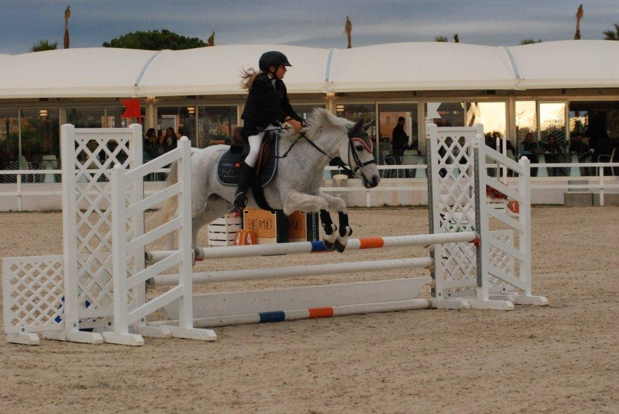 Pony at show jumping course.